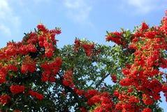 Rode vrolijke boom royalty-vrije stock afbeelding