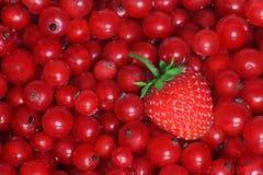 Rode Vruchten royalty-vrije stock afbeeldingen