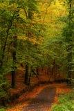 Rode weg gele bladeren Royalty-vrije Stock Foto's