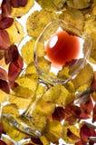 Rode wijnglas Stock Fotografie