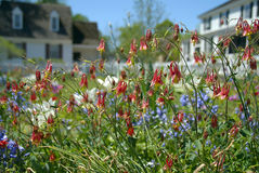 Rode Wilde bloemen Stock Foto