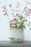 Rode wilde bloemen in witte emmer Stock Fotografie