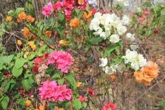 Rode, witte en gele bloemen Royalty-vrije Stock Afbeelding