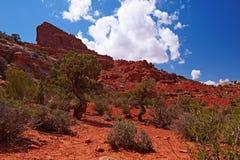 Rode Woestijn stock foto's