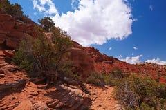 Rode Woestijn stock fotografie