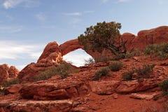 Rode Woestijn bij Zonsondergang Stock Afbeeldingen