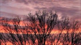 Rode wolken en raven op een boom, kraaien stock videobeelden