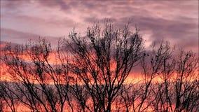Rode wolken en raven op een boom, kraaien stock footage