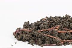 Rode wormen in compost royalty-vrije stock foto