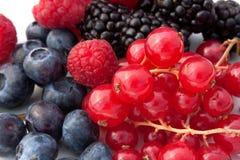 Rode Zachte Vruchten - Close-up Stock Foto