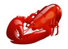 Rode zeekreeft Stock Afbeeldingen