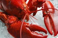 Rode zeekreeft op ijs stock foto's