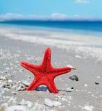 Rode zeester door de kust Royalty-vrije Stock Afbeeldingen