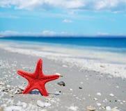 Rode zeester door de kust royalty-vrije stock fotografie