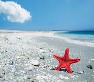 Rode zeester door de kust royalty-vrije stock afbeelding