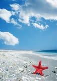 Rode zeester door de kust Royalty-vrije Stock Foto's