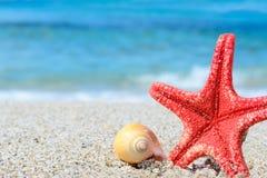 Rode zeester en gele shell door de kust stock fotografie