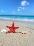 Rode zeester en shells door het overzees stock fotografie