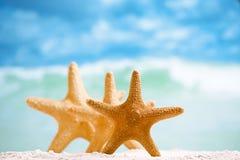 Rode zeester met oceaan, strand, hemel en zeegezicht Stock Fotografie