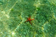 Rode zeester op de zeebedding Montenegro, het Adriatische Overzees ontruim stock footage