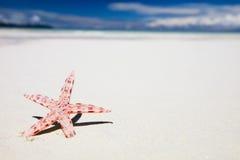 Rode zeester op tropisch strand Royalty-vrije Stock Foto's