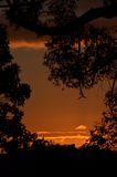 Rode zonsondergang door bomen die, Australië gelijk maken Stock Afbeelding