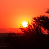 Rode zonsondergang in een woestijn Royalty-vrije Stock Afbeeldingen