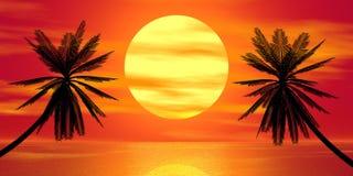 Rode zonsondergang en palm Royalty-vrije Stock Foto