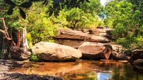 Rodeado por la charca de las piedras en Forest Reflects Rocks Plants Sky metrajes