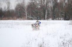 Rodeln mit Hund Lizenzfreie Stockfotografie