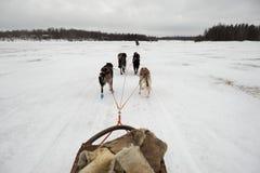 Rodeln mit Schlittenhund in Lappland in der Winterzeit Lizenzfreies Stockbild