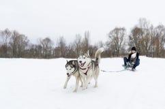 Rodeln mit zwei Hundeschlittenhunden Stockfotografie