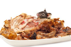 Rodent eating cooked chicken Royalty Free Stock Photography