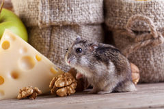 Rodent heaven - hamster or mouse in the pantry stock image