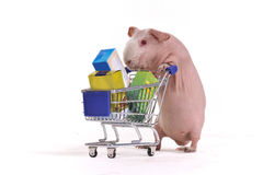 Rodent in a Shop. Rodent animal is with a full Supermarket Basket Royalty Free Stock Image