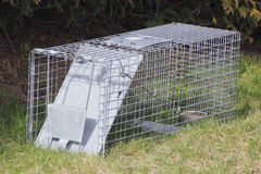 Rodent Trap Royalty Free Stock Images