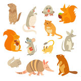 Rodent of the world, a big set vector illustration.  on a white background Royalty Free Stock Images