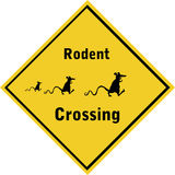 RodentCrossing-01 Royalty Free Stock Image