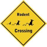 RodentCrossing-01 Immagine Stock Libera da Diritti
