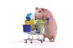 rodenten shoppar Royaltyfri Bild