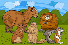 Rodents animals cartoon illustration Stock Photos