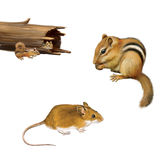 Rodents: chipmunk eating a nut, yellow brown mouse, two chipmunks in a fallen log, Isolated on white background. stock illustration