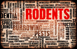 Rodents Royalty Free Stock Photography
