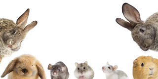 Rodents set looking Stock Images