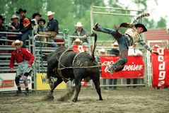 Rodeo 02 Royalty Free Stock Image