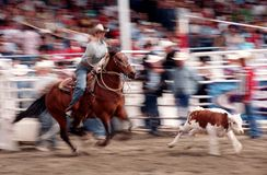 Rodeo 05 Royalty Free Stock Image