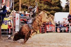 rodeo Lizenzfreies Stockfoto