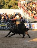 rodeo stockfotos