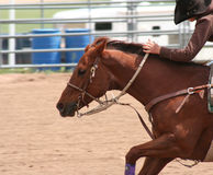 Rodeo 3 Stock Photography