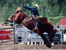 Rodeo Immagine Stock